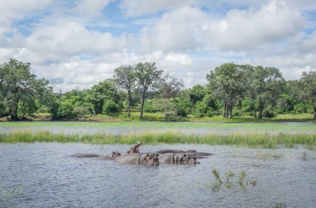 Botswana Safari Chobe River Bootstour