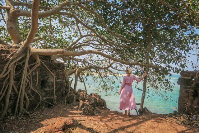 Goa Indien Paradise Beach Baum