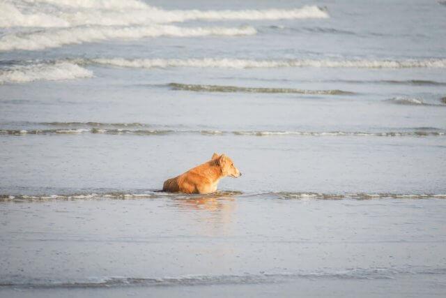 Goa Indien Agonda Strand