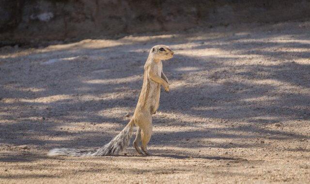 Namibia Rundreise Solitaire Erdhörnchen