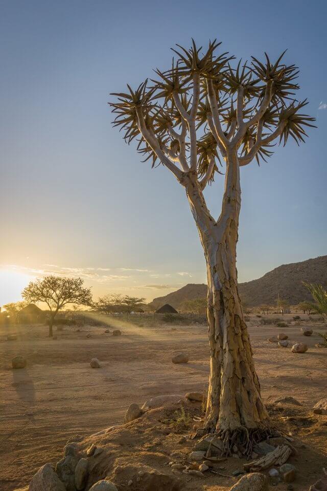 Namibia Rundreise Solitaire Koecherbaum