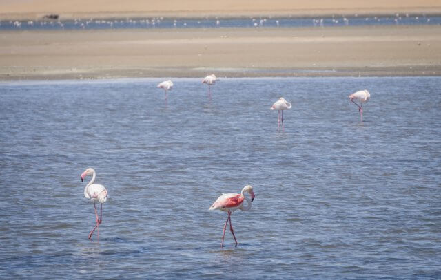 Namibia Rundreise Walvisbay Flamingos