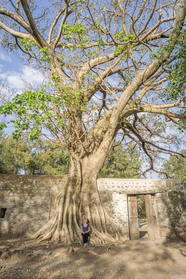 Aethiopien Reisen Gondar Bad des Fasiladas Bäume