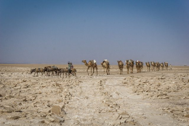 Aethiopien Reisen Jeeptour Danakilwüste Salzabbau Kamele
