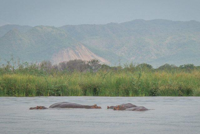 Aethiopien Reisen Arba Minch Hippos