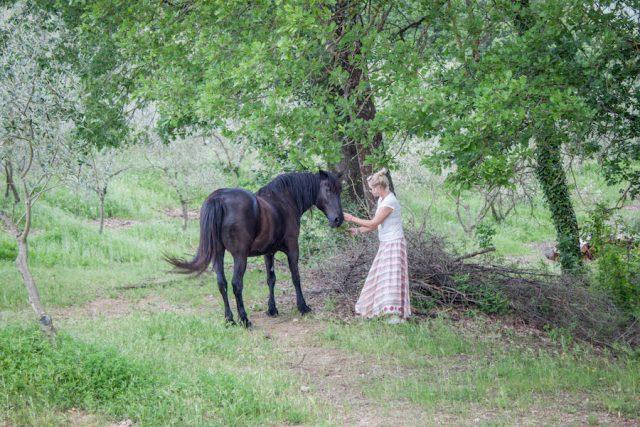 Toskana Italien Pomarance Agriturismo Apparita Pferd