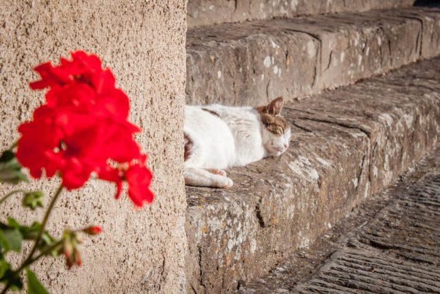 Toskana Italien Pomarance Montegemoli Katze