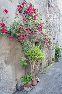 Toskana Italien Pomarance Montegemoli Rosen