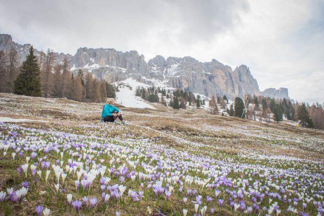 Wellnesshotel Suedtirol_Dolomiten Wandern_Urlaub Suedtirol Cyprianerhof Wanderung Messner Jochhütte Krokus