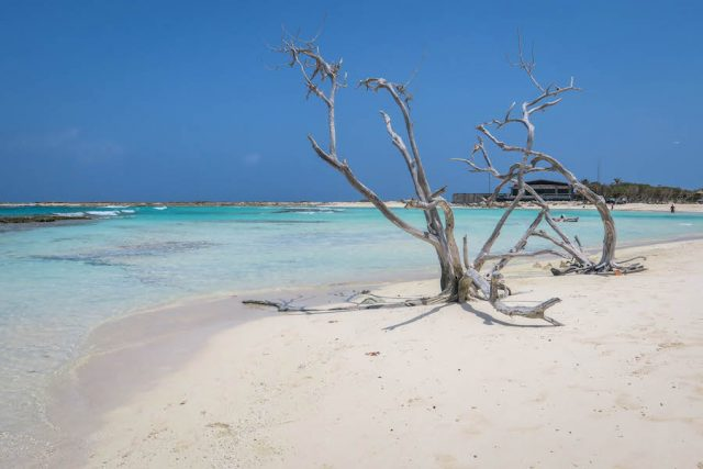 Aruba Urlaub ABC Inseln Baby Beach Baum