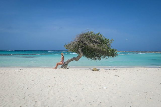Aruba Urlaub ABC Inseln Baby Beach