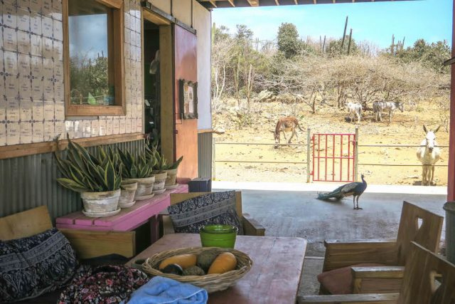 Aruba Urlaub ABC Inseln Donkey Sanctuary Cafe