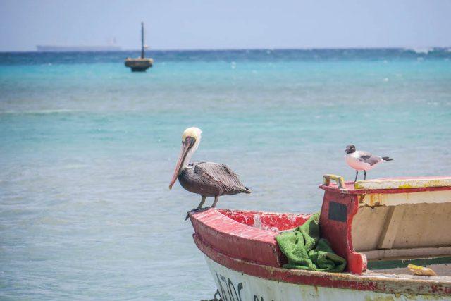 Aruba Urlaub ABC Inseln West Deck Pelikan