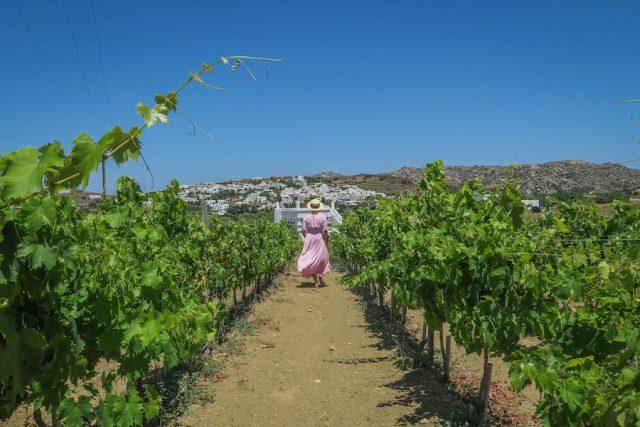 Kykladeninseln Tinos Vaptistis Winery Stenis