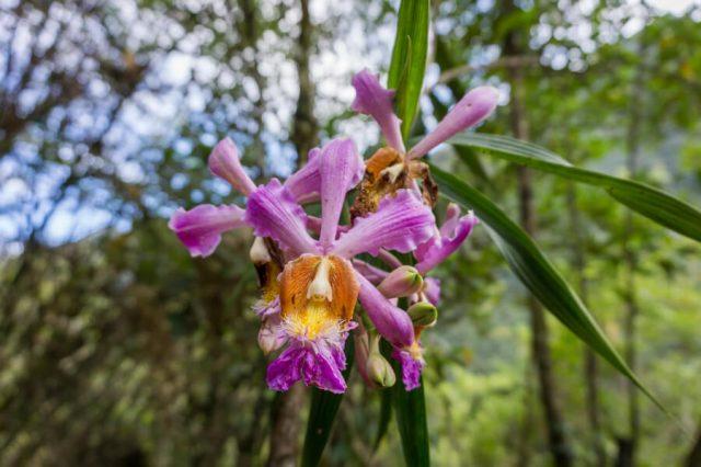 Inka Trail Machu Picchu Peru Orchideen