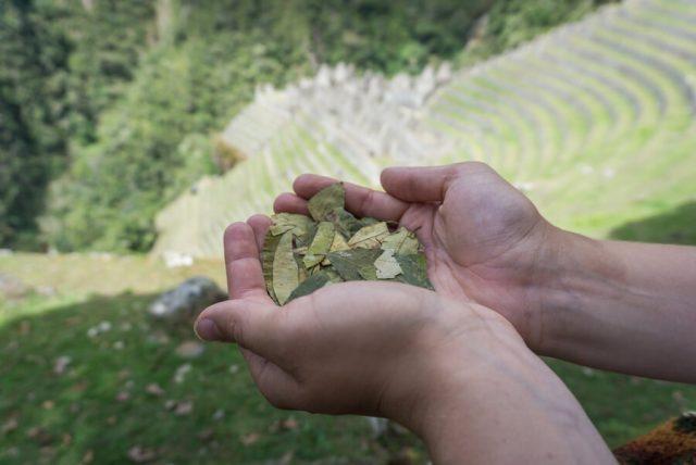 Peru Reisen Inka Trail Winay Wayna Coca Blaetter