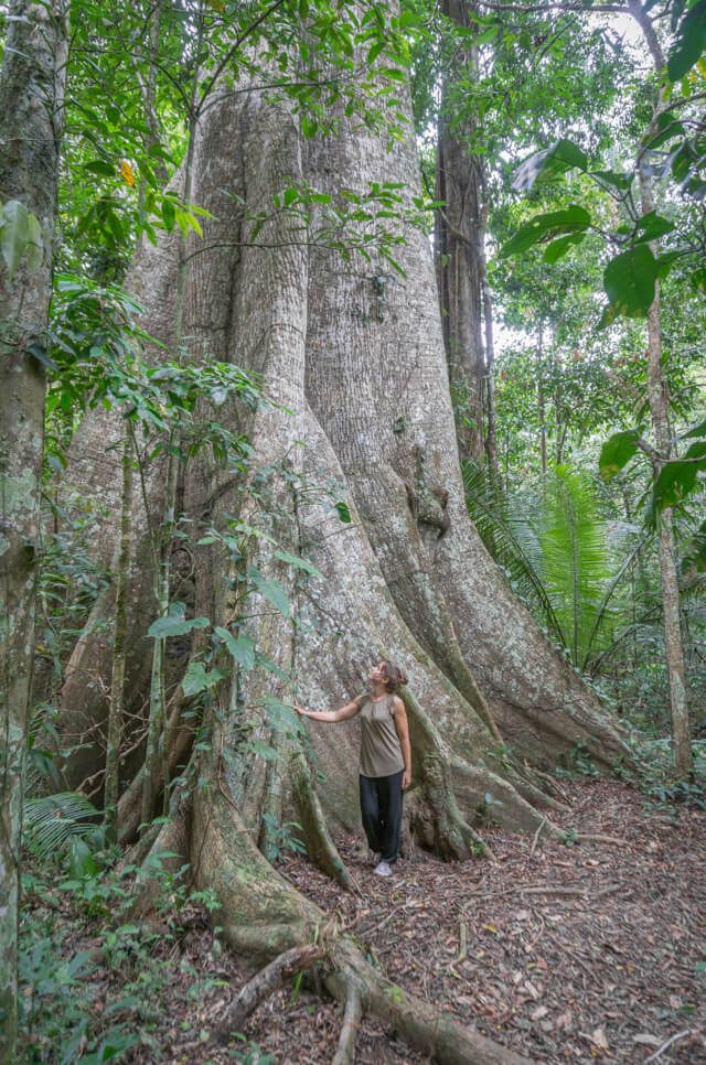 Peru Reisen Puerto Maldonado Amazonas Baum