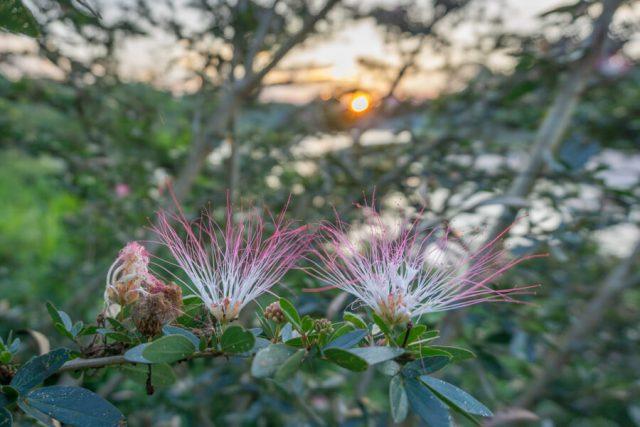 Peru Reisen Puerto Maldonado Amazonas Blumen