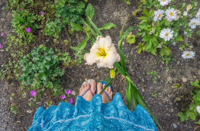 Bodensee Urlaub Insel Mainau Blumen