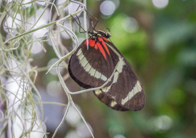 Bodensee Urlaub Insel Mainau Schmetterlingshaus