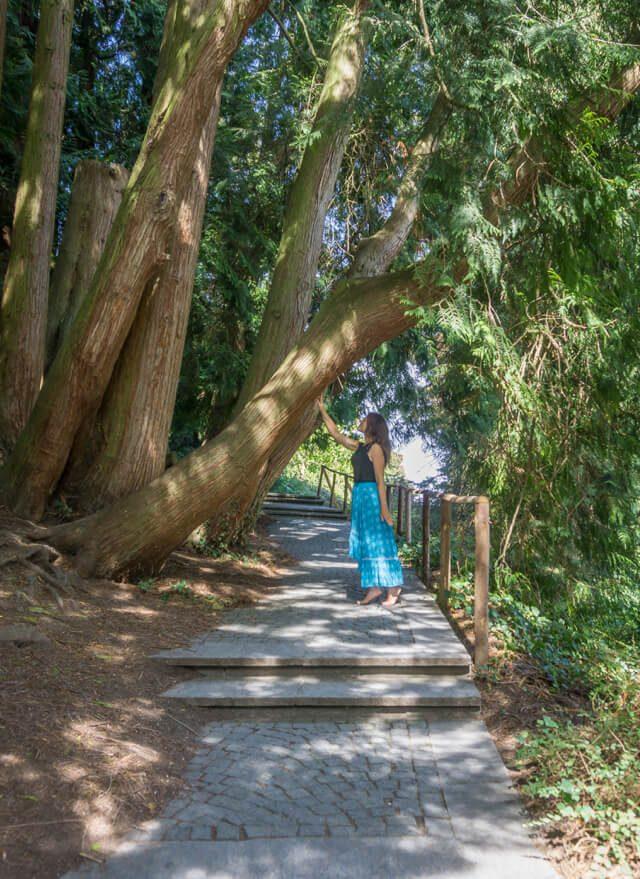 Bodensee Urlaub Insel Mainau alter Baumbestand