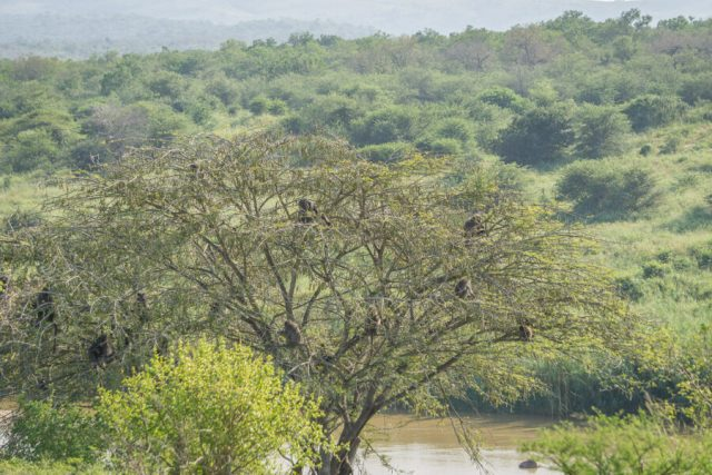 St Lucia Suedafrika Wetlands KwaZulu Natal