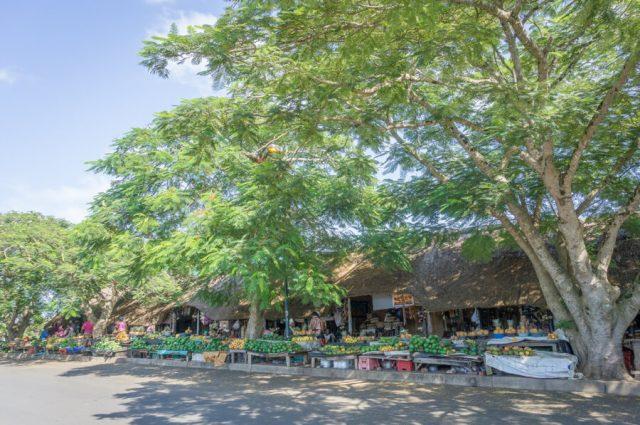 St Lucia Suedafrika Wetlands KwaZulu Natal Obst