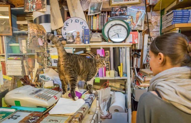 Italien Venedig Urlaub Libreria Acqua Alta Katzen
