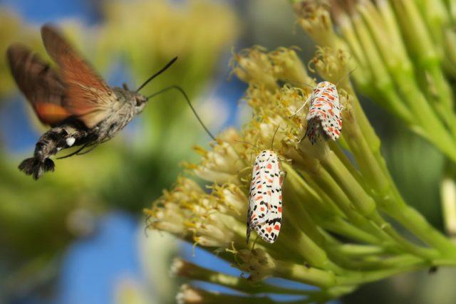 Madeira Urlaub Porto Santo Garten Schmetterlinge