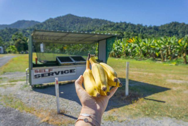 Mission Beach Cairns Australien Babinda Bananen