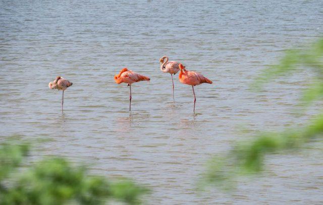 Curacao Urlaub Karibik niederlaendische Antillen Flamingos