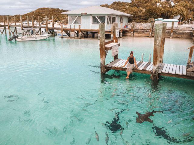 Bahamas Exumas Yacht Charter Compass Cay Ammenhaie