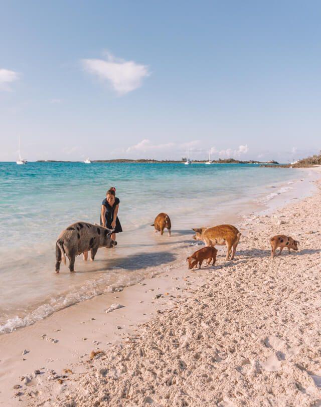 Bahamas Exumas Yacht Charter Pig Beach