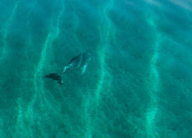 Bahamas Exumas Yacht Charter Shroud Cay Delfin