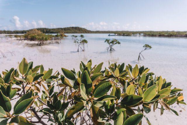 Bahamas Exumas Yacht Charter Shroud Cay Mangroven
