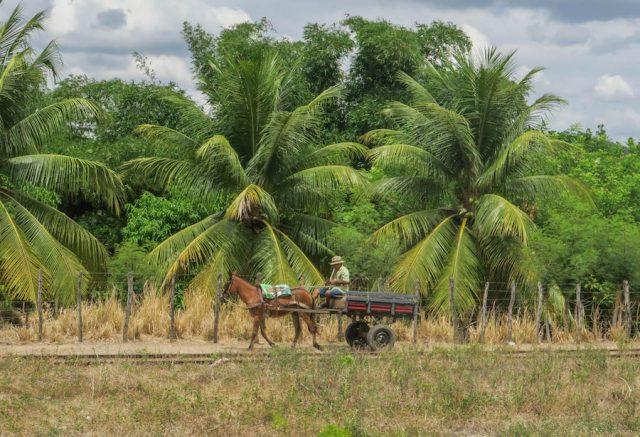Brasilien Urlaub Ceara Fortaleza Bahnhof Farmer
