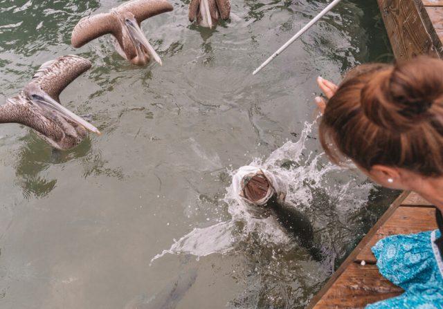 Key West Florida Sehenswuerdigkeiten Fische fuettern