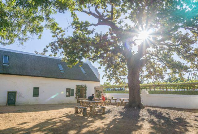 Kapstadt Urlaub Stellenbosch Weingut