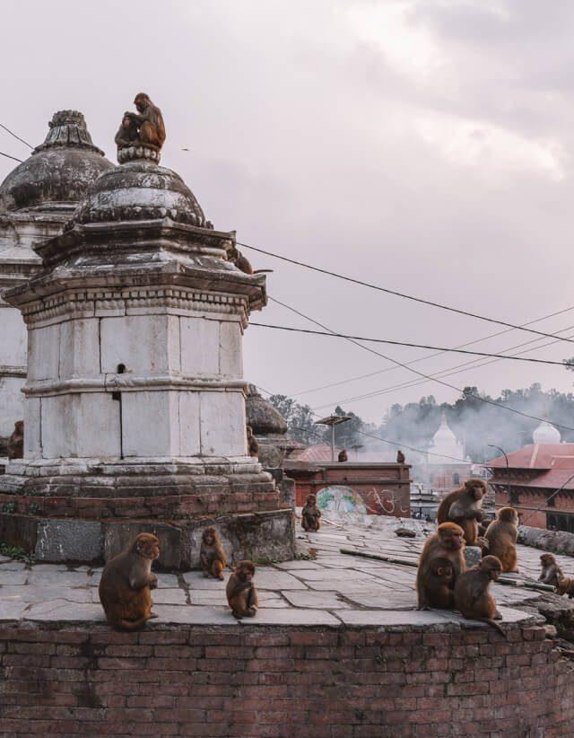Nepal Reisen Kathmandu Pashupatinath Tempel Affen