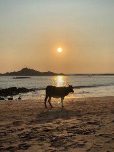 Yoga Urlaub Indien Om Beach Sonnenuntergang