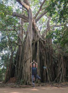 Yoga Urlaub Indien SwaSwara Yoga Banyan Baum