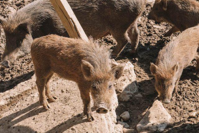Highlights Nepal Pokhara Fewa See The Pavilions Himalayas Villa Farm Schweine