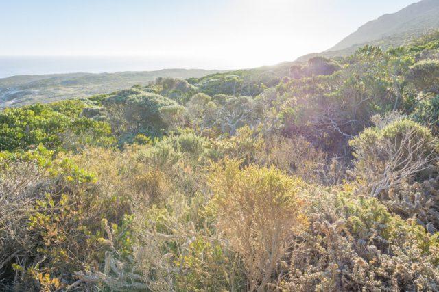Kap der Guten Hoffnung Fynbos Vegetation Kaphalbinsel