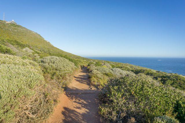 Kap der Guten Hoffnung Kap Halbinsel Vegetation