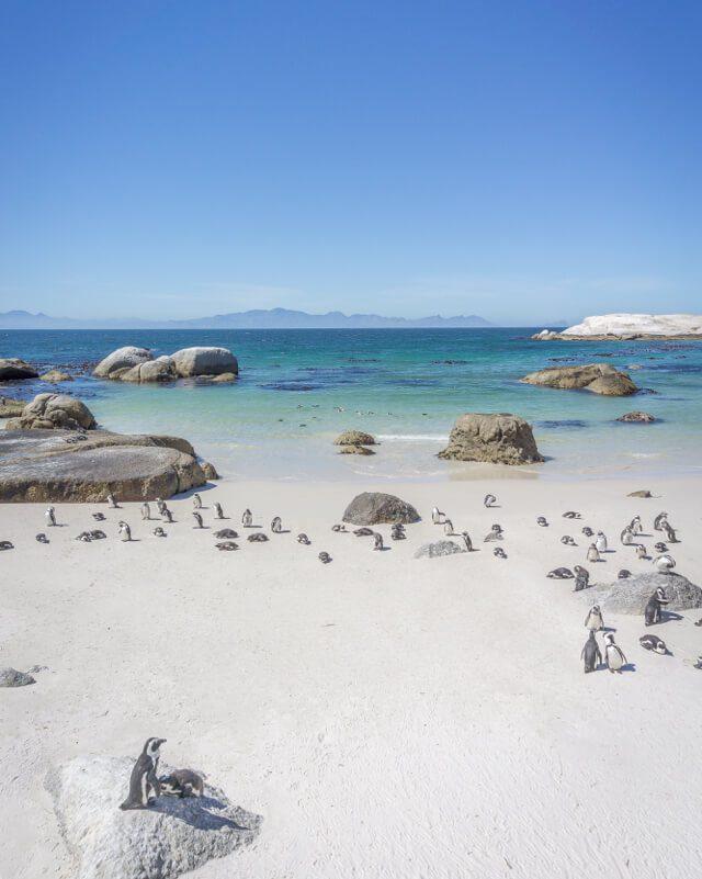 Kap der Guten Hoffnung Simons Town Pinguine Boulders Beach