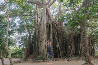 Yoga Urlaub Indien SwaSwara Yoga Baum