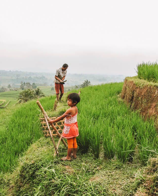 Bali Sehenswuerdigkeiten Jatiluwih Reisterrassen