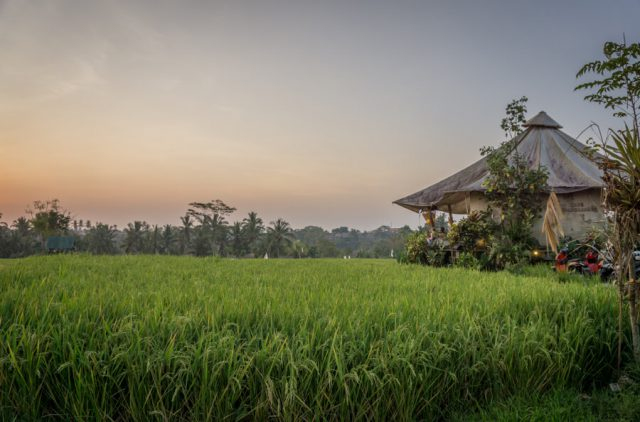 Bali Sehenswuerdigkeiten Ubud Pomegranate Cafe