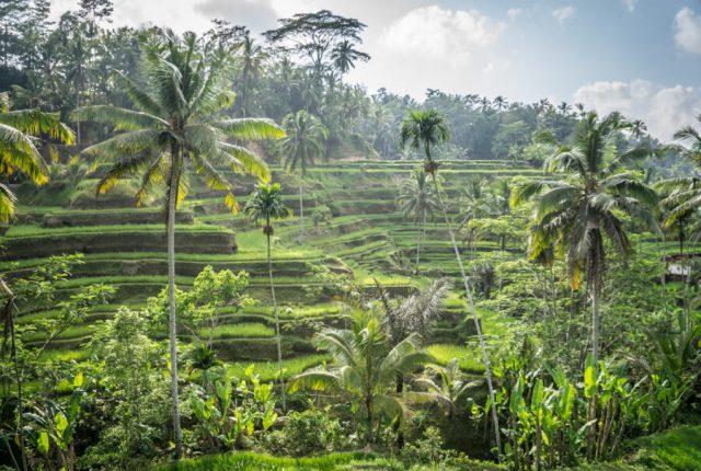 Bali Sehenswuerdigkeiten Ubud Tegallalang Reisterrassen-2