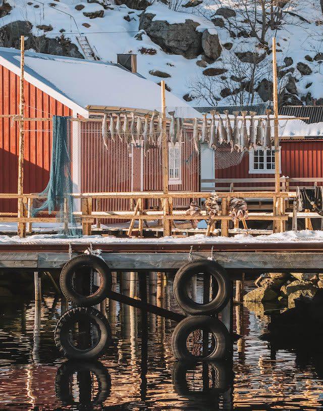 Kabeljau Nusfjord